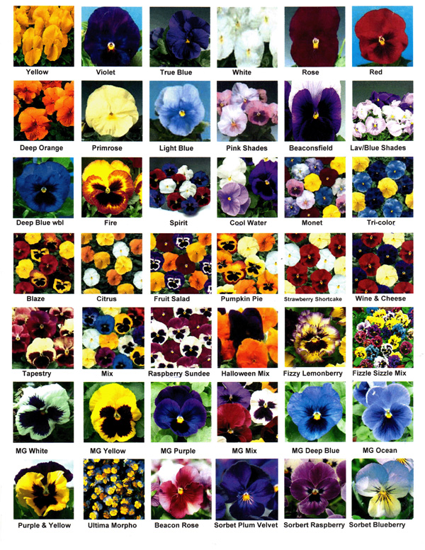 Annual Flowers List With Pictures Mycoffeepot Org
